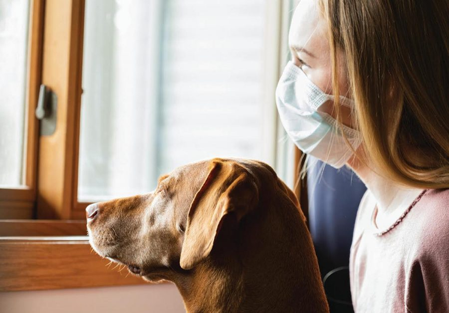 Pets & the Pandemic